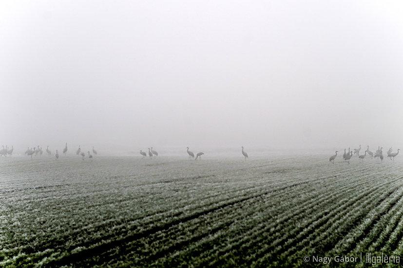 Darvak ködben | Nagy Gábor