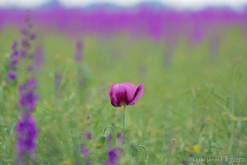 Virágzó mezőgazdaság | Lázár János