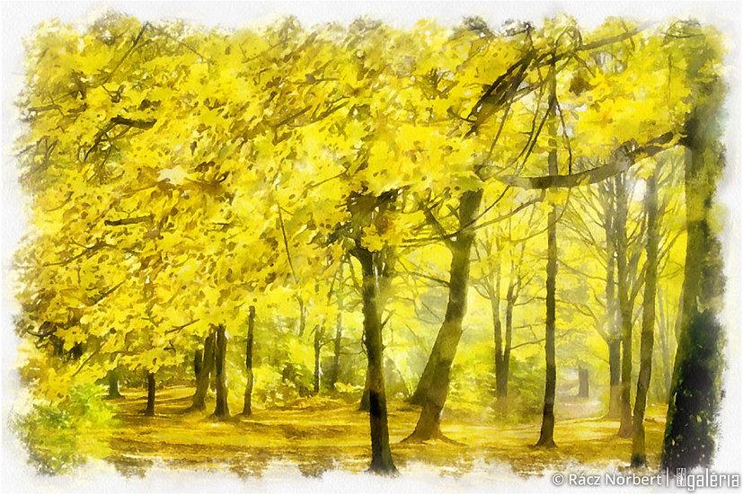 Sárga erdő | Rácz Norbert