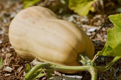 Pumpkin, red bio /kg