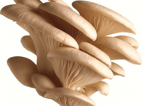 Oyster Mushrooms / Μανιτάρια bio 170g