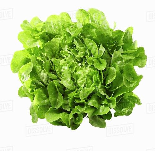 Okleaf green bio