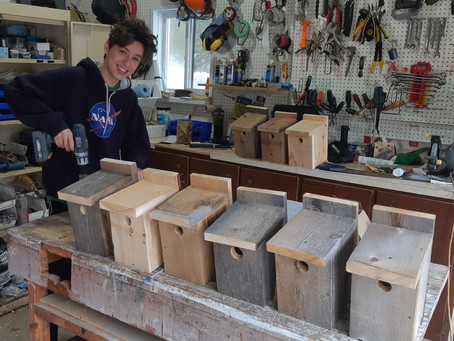 Boy builds birdhouses, business booms
