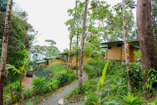 forest lodge costa rica 's view