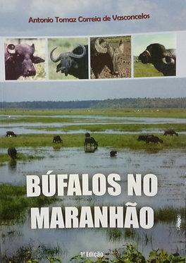 Búfalos no Maranhão