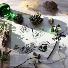 Natural Drawing with Julie Mia Holmes