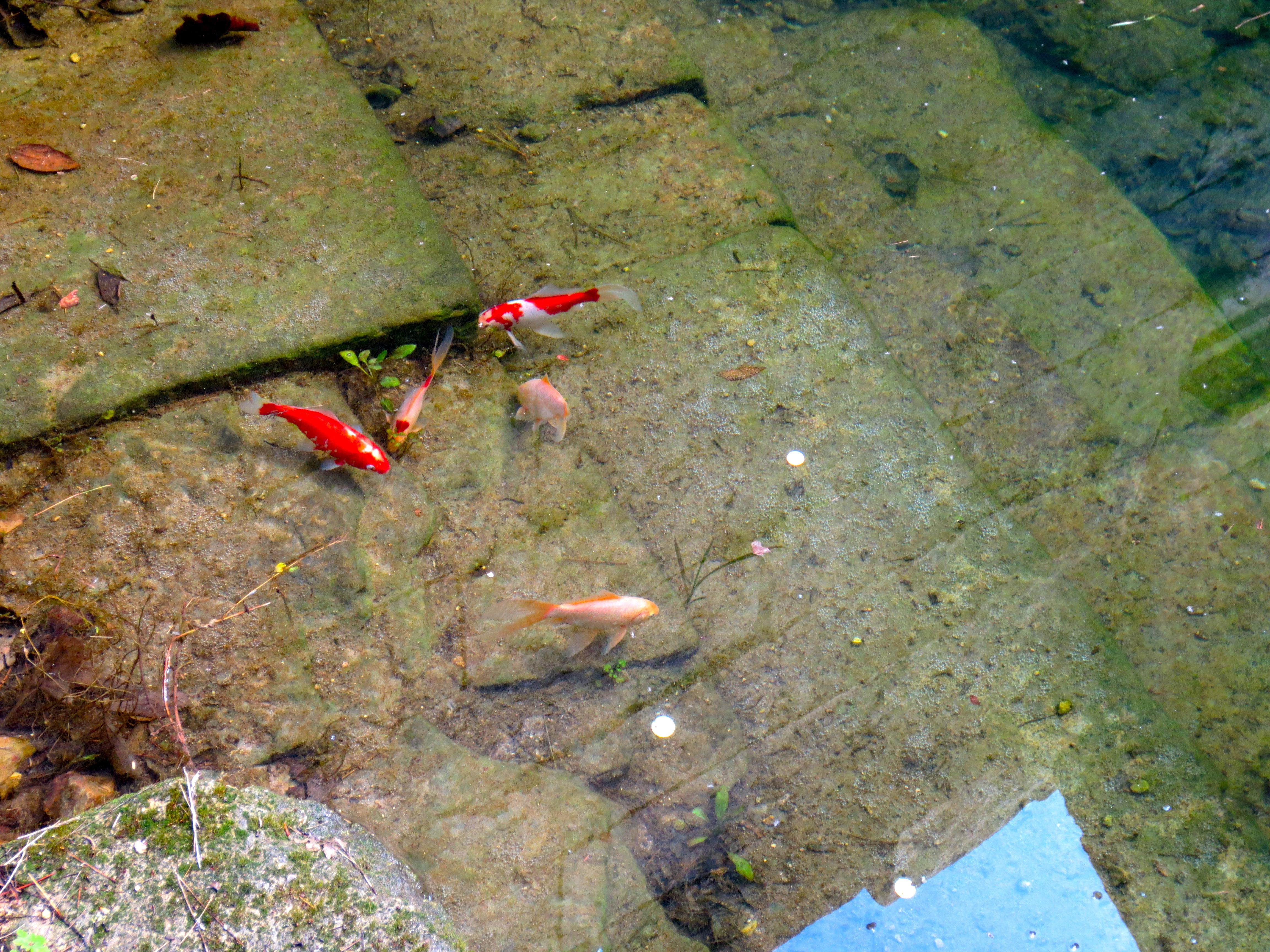Swimmin' amongst Roman ruins