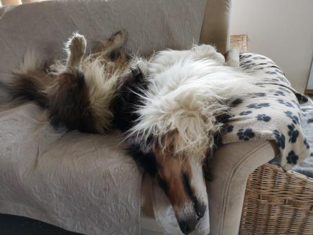 [UPDATE] Nur die Hunde machen langsam schlapp…