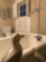 Gulls Bath.jpg