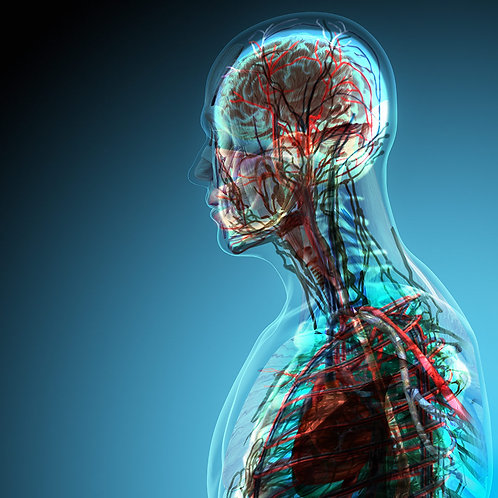 Anatomy and Physiology - Level 3   55 CPD points