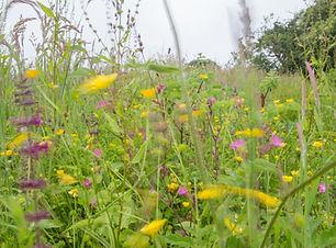 meadow in motion.jpg