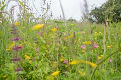 meadow in motion