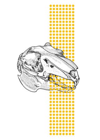 crâne pas paques à vendre-03.jpg