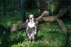Zoo Berlin 2