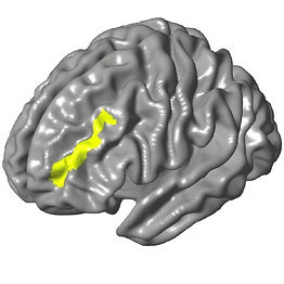Brain model with the left dorsolateral prefrontal gyrus highlighted