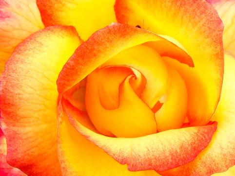 Floral Fire