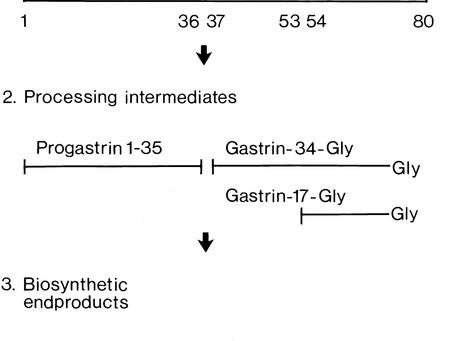 Excrétion de produits à base de progastrine dans l'urine humaine