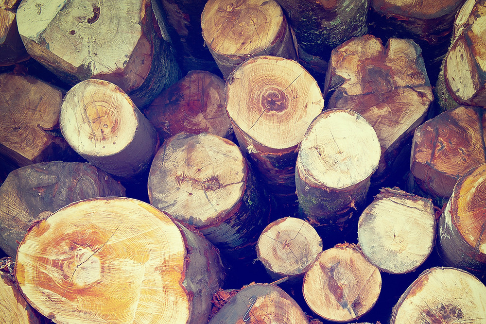 Photograph of a stack of firewood, courtesy of Wix.