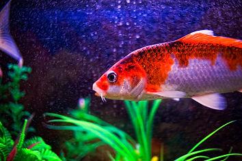 a fish in our hotel in seoul.jpg