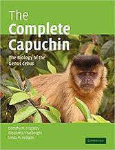 Complete Capuchin.jpg