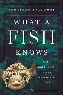 What a Fish Knows.jpg