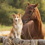 dogandhorse2.jpg