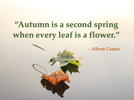 Autumn reflections: 5 quick quotes to inspire and motivate