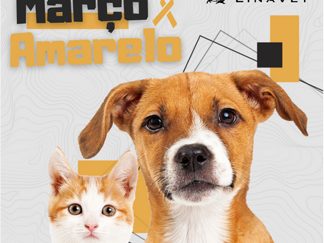 Março amarelo: Mês de prevenção às doenças renais em cães e gatos!