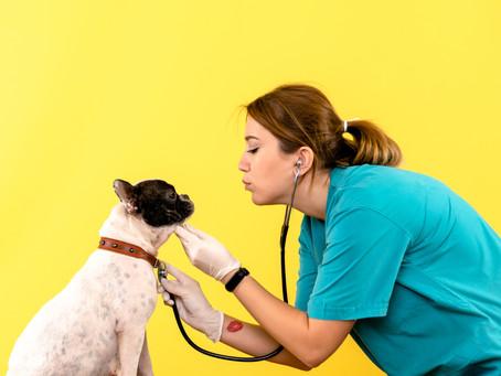 Consultas veterinárias aumentam em 30% no outono