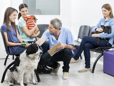 O que fazer para melhorar o marketing de sua clínica veterinária