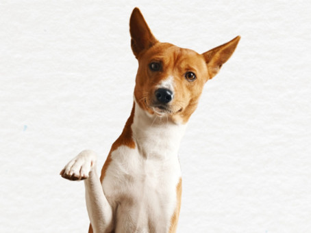 Janeiro Branco: Cães e gatos podem sofrer com depressão?
