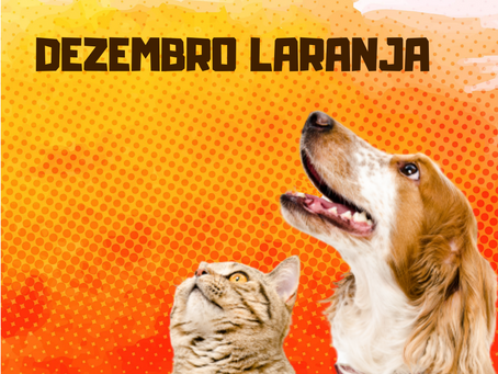 """Leucemia em animais: """"Saiba as diferenças e como identificá-las"""""""