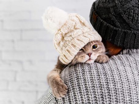 Seu pet está com frio? Veja cuidados para a temporada de inverno