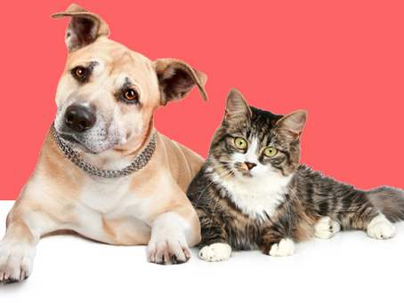 Setembro Vermelho: Mês de Conscientização para Problemas Cardíacos em Pets