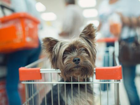 Dicas para organizar a Black Friday do seu Pet Shop