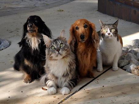 Lei PLC 27 é sancionada e determina maior pena para maus tratos de animais