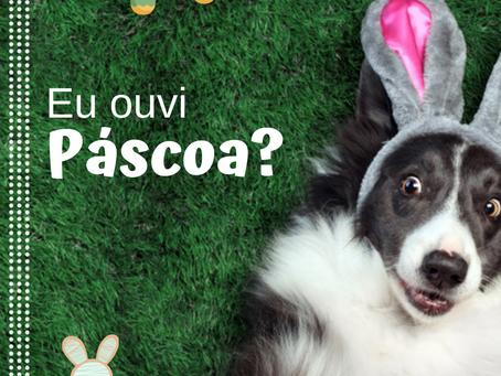 Tutores devem estar atentos à ingestão de chocolate pelos pets durante a Páscoa