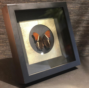 Vlinderlijst3.jpg