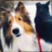 Guelph Dog Walker