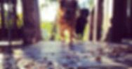 Ahimsa Dog Walking Guelph