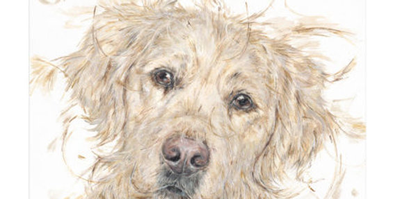 Aaminah Snowdon- Puppy Dog Eyes