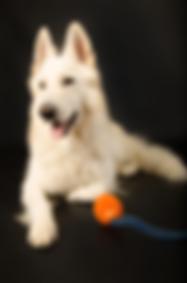 hunde--18-.png