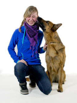 Schäferhund (3)