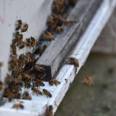 Bee Pollination and Off-Season Storage Services