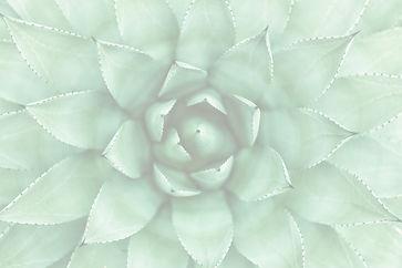 green desert aloe