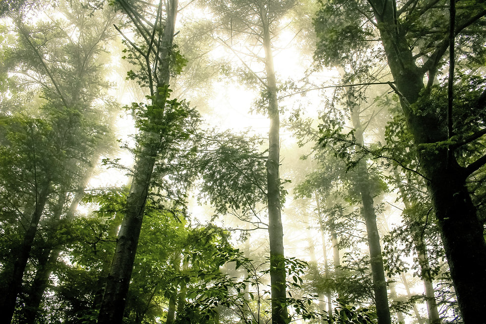 green sustainable forest