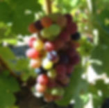 biodynamic organic wine