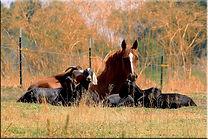 horse_goats.jpg