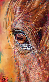 Arabian eye-final-signed.jpg