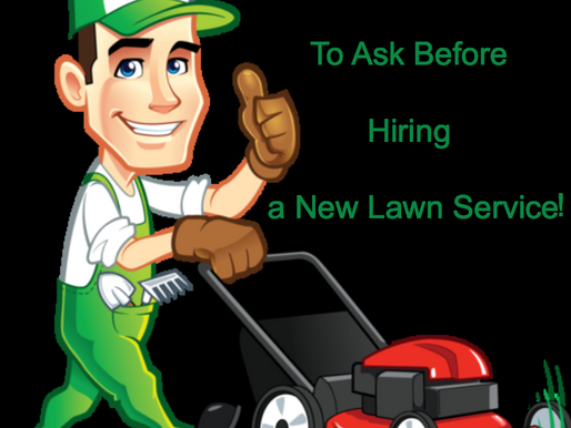 7 Questions to Ask a Lawn Service Provider Before You Hire Them